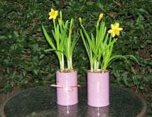 Julie Speed daffodis main pic