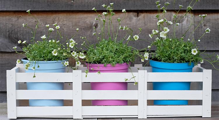 Featured PlastiKote Garden Colours - Sea View, Azalea, Light Blue